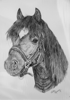 pony portrait